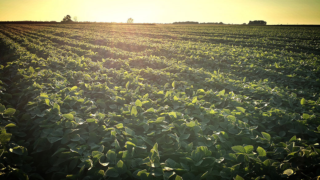 Indiana-soybean-crop-2014  important FSA Dates, Deadlines & Holidays Indiana soybean crop 20141