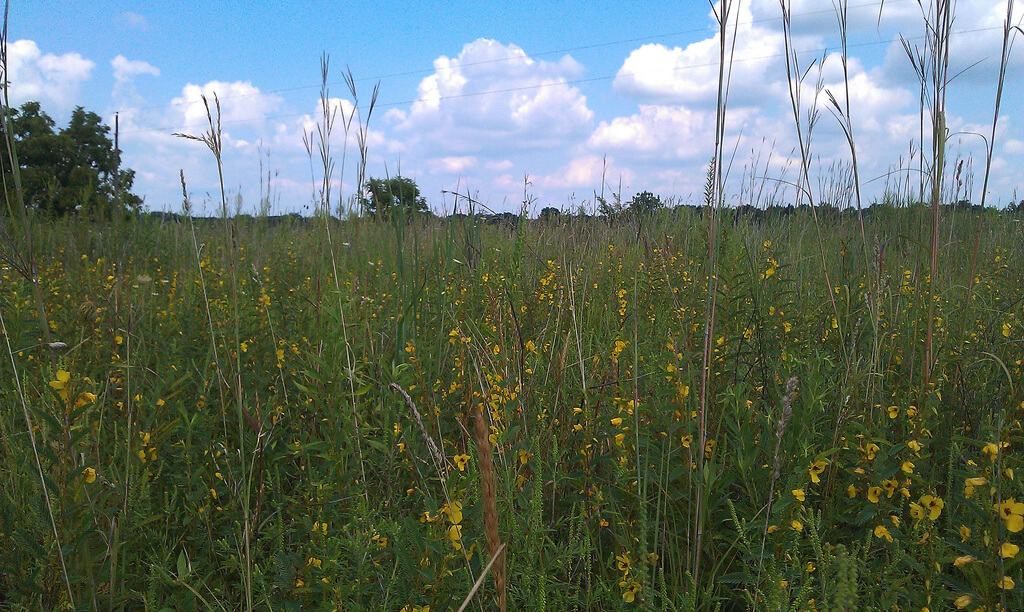 Native Prairie Restoration and CRP 33 Program Indiana